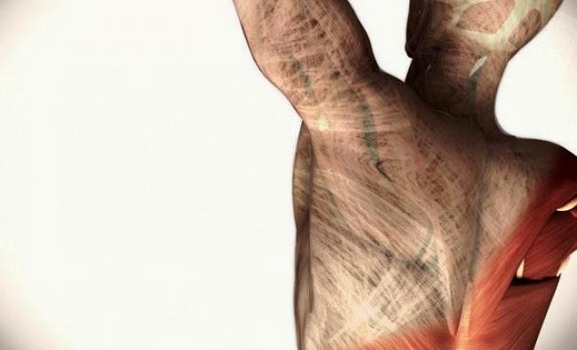 El sistema fascial. Envueltos y conectados por un tejido vivo, altamente adaptable y con mucha movilidad.