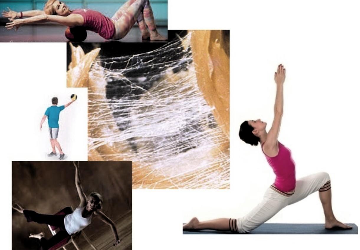 Fascial Fitness: Remodelar el tejido fascial a través del movimiento
